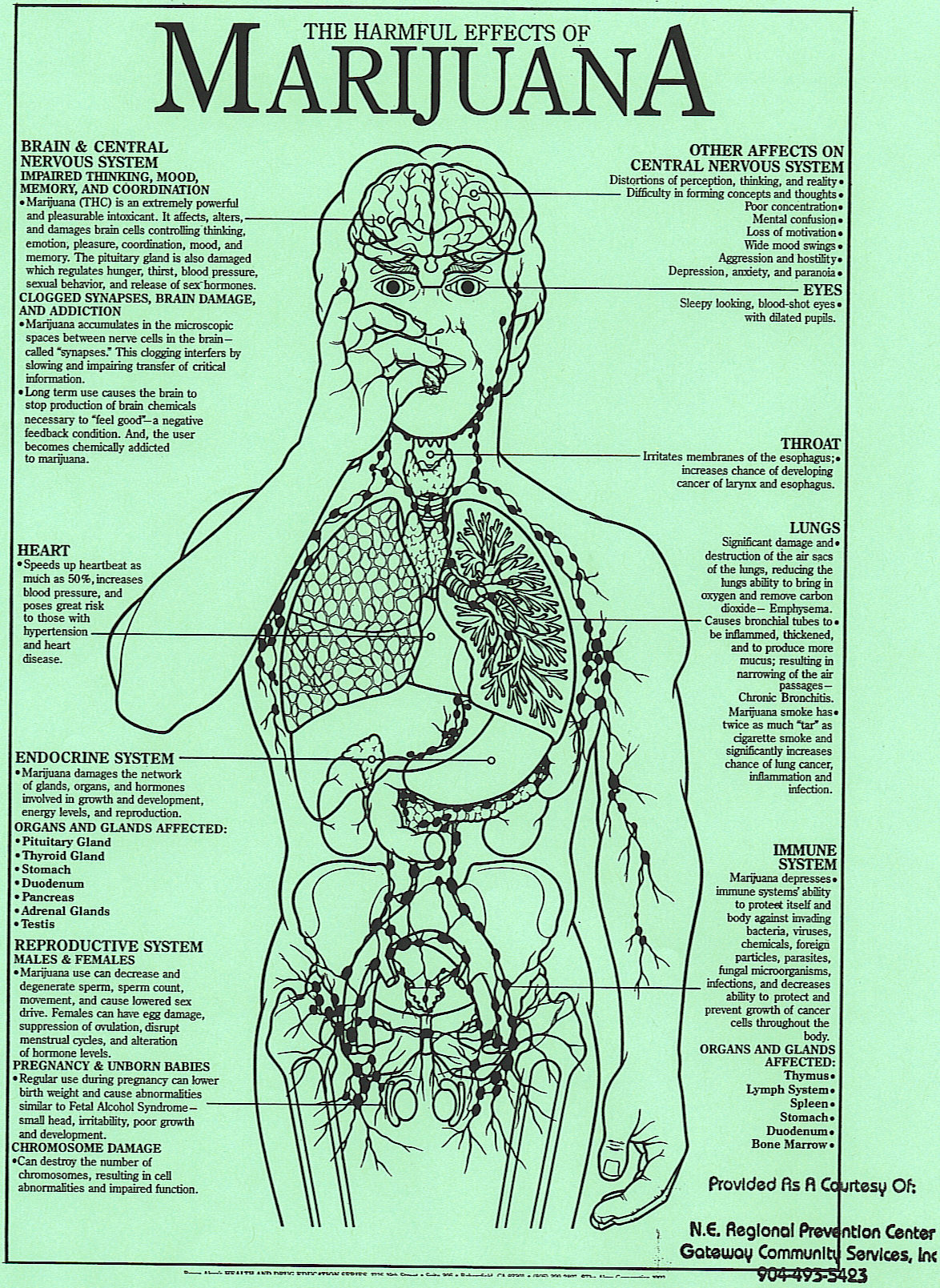 Effects of prolonged use of marijuana for various body systems